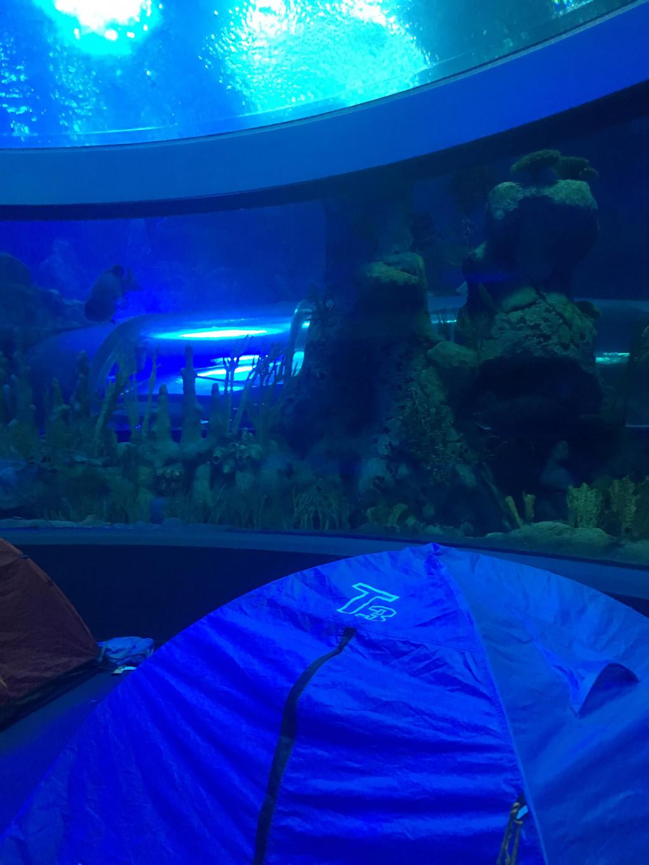 香港迪士尼 珠海长隆 深圳一家三口亲子8天游