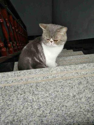 壁纸 动物 猫 猫咪 小猫 桌面 309_412 竖版 竖屏 手机