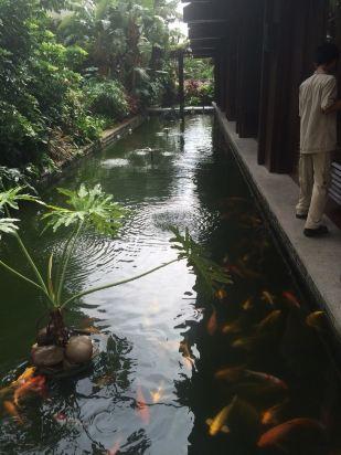 五号别墅的整体风格很像巴厘岛的美利亚度假村,古朴的建筑风格与绿树