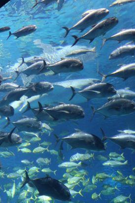 壁纸 海底 海底世界 海洋馆 水族馆 274_412 竖版 竖屏 手机