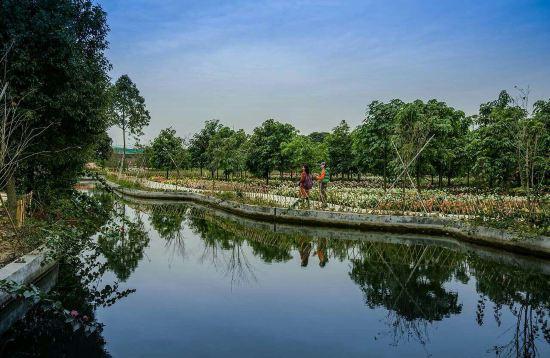 广州白天风景图