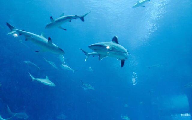 海底蓝色背素材