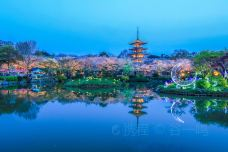 东湖樱花园-武汉-C_image
