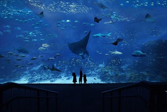 Sentosa S.E.A. Aquarium™ Ticket